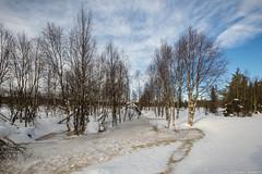 Z19_0989 LT (Zoran Babich) Tags: lapland lappi finland suomi winter snow landscape muonio fi
