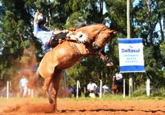 Dionatan Texera e Meia-Lua (Eduardo Amorim) Tags: gaúcho gaúchos gaucho gauchos cavalos caballos horses chevaux cavalli pferde caballo horse cheval cavallo pferd pampa campanha fronteira quaraí riograndedosul brésil brasil sudamérica südamerika suramérica américadosul southamerica amériquedusud americameridionale américadelsur americadelsud cavalo 馬 حصان 马 лошадь ঘোড়া 말 סוס ม้า häst hest hevonen άλογο brazil eduardoamorim gineteada jineteada