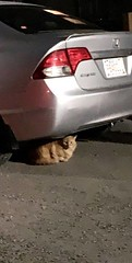 SIGHTING orange cat in #Martindale,near Martha's haven Pls RT, share to help find owners. YYC Pet Recovery shared a post. Seen this cat in Martindale,near Martha's haven.Anyone missing this little one,unfortunately was unable to catch him/her 2019-03-29T0 (yycpetrecovery) Tags: ifttt march 29 2019 0111am