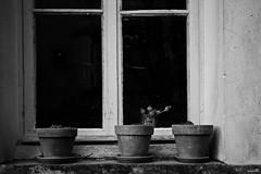 Nettoyage de printemps (Un jour en France) Tags: fenêtre noiretblancfrance noiretblanc canoneos6dmarkii canonef1635mmf28liiusm printemps
