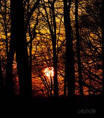 Lichtstimmung im Wald-28121-20190331.jpg (CitizenOfSeoul) Tags: wood baum deutschland badenwürttemberg sunset abendsonne ast 08landschaftenundnatur germany 03lichtundzeit lichtstimmung licht wald sonne sonnenaufgang
