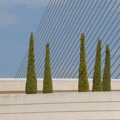 Colouring outside the lines (Arni J.M.) Tags: architecture cables italiancypresstrees colouringoutsidethelines five brigde sky assutdelorbridge calatrava santiagocalatrava valencia spain