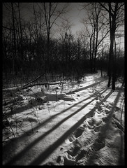 January Morning Walk (michellewendling907) Tags: bw blackandwhite snow january path nature outside morning naturallight midewin tallgrass prairie