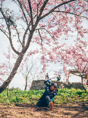 千櫻園|福壽山 (里卡豆) Tags: 和平區 臺中市 中華民國 tw olympus 25mm f12 pro olympus25mmf12pro penf olympuspenf