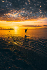 Midwest Sunset (FARES AL-SHAMMARY) Tags: beach seagull birds lighthouse sunset usa orange water nature canon 5d mark4 wide angle clouds cloudscape tones landscape landscapes