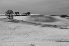 Dunes Jurassiennes - Cold dunes (gopillentes) Tags: jura arbres aube champs courbes givre hiver lumière montagne neige noiretblanc ombre france trees winter curves dunes ombres shadows mountain snow blackwhite noirblanc sérénité serenity mélancolie melancholy