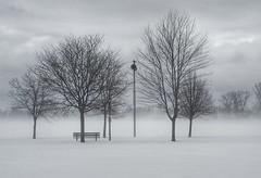 Snow, cold, wind, trees. (steve colwill) Tags: trees snowsquall winter blackandwhite print ottawa britannia