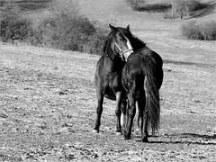 Love. (Reggae45026) Tags: lovak tavasz feketefehér orfű