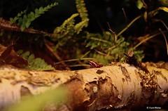 EN8A5079 (Karin Michies) Tags: botanischetuinen botanischetuinenutrecht universiteitutrecht utrechtuniversity botanicalgardens kikker frog dier animal natuur nature