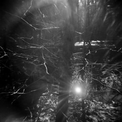 Lower Pond #2 (LowerDarnley) Tags: holga woods pond lake sun reflection branches bare breakheartreservation saugus ma localwoods flare