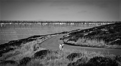Cow Green Dam . (wayman2011) Tags: colinhart fujifilmxt1 lightroom5 wayman2011 bwlandscapes mono rural dams dogs doris jackrussels pennines dales teesdale cowgreen countydurham uk