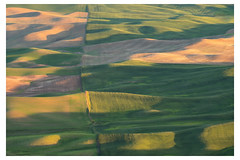 seam (Brian.Schick) Tags: palouse green wheat sunset rolling hills steptoe butte washington abstract graphic minimal golden hour