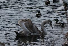 IMG_5061 (monika.carrie) Tags: monikacarrie wildlife scotland fyvie