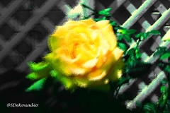 Yellow Rose (Stephenie DeKouadio) Tags: abstract abstractart abstractflower abstractflowers art artistic yellow colorful darkandlight shadows shadow