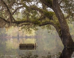 Swinging in the Lake (lorenmb1) Tags: oaktree reflection water swing statepark river lake