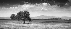 San Diego : Santa Ysabel (William Dunigan) Tags: black white lake henshaw santa ysabel east county san diego warner springs monochrome panorama landscape photography rural countryside southern california nature