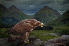 Eagle at Glen Coe (guenterleitenbauer) Tags: 2016 5d april austria canon guenter günter juli landscape leitenbauer urlaub wels bild bilder britain brittanien burg castle city flickr foto fotos great image images july key landschaft photo photos picture pictures ruine schottland scotland stadt town wasser water wwwleitenbauernet österreich