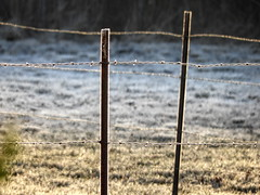 Frosty Fence (clarkcg photography) Tags: fence barbedwire tpost frost highlight cold winter fencedfriday rural northeast oklahoma