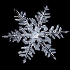 Snowflake (Margo Dolan) Tags: snowflake winter frost crystal cold blackandwhite extrememacro ringflash canon mpe65 focusstacking ice snow closeup symmetry wonder shamrock
