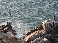 Puerto Escondido, Oaxaca, Mexico (asterisktom) Tags: chiapas mexico oaxaca 2019 march puertoescondido bird vogel ave 鸟 птица 鳥 pajaro coastal mexico2019janmarch