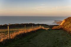 A Lovely Morning (Shastajak) Tags: hastingscountrypark fencefriday fence sunrise earlymorninglight earlymorningsunshine hastingsharbourarm