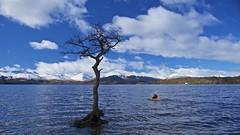 Milarrochy Bay (billmac_sco) Tags: scotland lochlomond milarrochy bay tree water mountains boat scenic landscape clouds