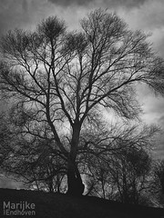 Silhouette (Marijke van Endhoven) Tags: blauwekamer wageningen rhenen tree monochrome black white nature trees moody nikon d750 sigma