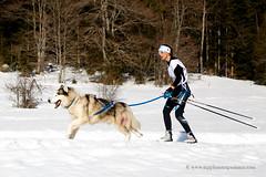 Ski Joëring race (My Planet Experience) Tags: malamute dog animal team musher mushing woman skier ski joring joëring skijoering skijoring retordica race racing running snow snowdog winter sleddog sledgedog sleighdog myplanetexperience wwwmyplanetexperiencecom