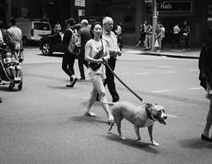 The Protector (McLovin 2.0) Tags: candid street streetphotography monochrome bw urban city sydney australia summer sony a7r zeiss 55mm crossing