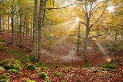 A Ray of Hope (Hector Prada) Tags: autumn otoño forest bosque leaves hojas light luz shadows sombras mist bruma fog niebla snow nieve sunlight rocks rocas moss musgo opakua paísvasco basquecountry
