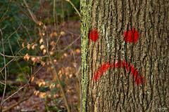 trauriger Baum (Doorega) Tags: 3200 doorega nikon3200 brown daylight december face forest leaves mood nature smilie tamron tree wald winter