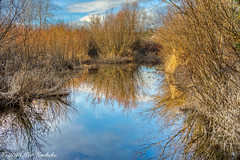 Rithets Bog Reflection (Per@vicbcca) Tags: rithetsbog saanich victoria britishcolumbia canada ilce7m2 sony a7ii fe24105mmf4goss reflection landscape