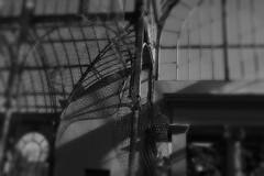 Silencio (alfonsocarlospalencia) Tags: jaume plensa palacio de cristal silencio madrid invisible alambre escultura transparencia cara arte paz serenidad desenfoques contemplación belleza poesía estética 999 reflexión byn sensibilidad contrapicado perfección ilusión