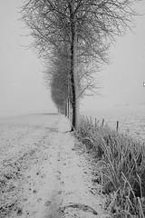 Bankwegel_Haasdonk - Belgium (roland_tempels) Tags: snow haasdonk belgium supershot trees nature landscape