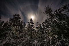 Winter dream (clemensgilles) Tags: trees winter moon moonglow longexposure nightphoto nachtfotografie deutschland germany eifel
