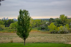 Looking down at Faversham Lake with the Denver skyline in the distance under a cloudy sky as fall colors begin to touch the trees of Faversham Park. Taken on 9-28-18, at Hillside Park in Arvada, Colorado.  . . . . .  #CanonRebelT5 #Canon #Rebel #T5 F/5.6 (oooshinyphotography) Tags: favershamlake canonrebelt5 skyline trees coloradoshared hillsidepark coloradotography arvada canon oooshiny fall scapecaptures colorado cloudysky denver sky t5 coloradolove rebel fallcolors nature tree coloradocreative favershampark cloudy coloradophotography oooshinyphotography viewcolorado coloradophotographer coloradocollective