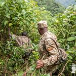Alla ricerca dei gorilla di montagna, Bwindi Impenetrable Forest, Uganda