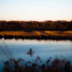 Wetland Prairie Landscape 018 (noahbw) Tags: d5000 nikon sedgemeadowforestpreserve abstract autumn grass landscape light marshland minimal minimalism natural noahbw pond prairie quiet reflection sky square still stillness sunlight trees water wetlands