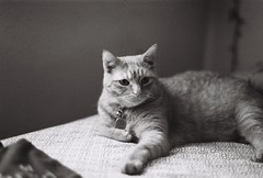 Bentley (luke_coleman_film) Tags: cats blackandwhite bw 35mm film ilford125 ilford