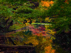 Full of Colors (Eshke04) Tags: full color foliage light reflection late autumn tree leaves forest water pond red green yellow orange shadow contrast composition perspective frame meiji shrine tokyo japan season nature moment silence tranquility
