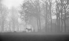 Boerderij Groot Koestapel met revueflex-sd-1 - 030 (R. van Stormbroek) Tags: boerderij groot koestapel met revueflexsd1