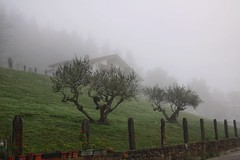 IZURTZA (eitb.eus) Tags: eitbcom 21786 g145093 tiemponaturaleza tiempon2018 invierno bizkaia izurza victoruriarte