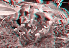 Anaglyptic 3D  image of pitcher plants at the Rawlings Conservatory in Baltimore. #pitcherplant #carnivorousplants #rawlingsconservatory  #botanicalgardens #nepenthes #anaglyph #anaglyph3d #stereoscopic (Bill A) Tags: anaglyph3d nepenthes stereoscopic pitcherplant botanicalgardens anaglyph carnivorousplants rawlingsconservatory