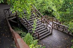 Wooden boardwalk. (Andy @ Pang Ket Vui ( shootx2 )) Tags: wooden boardwalk staircase fujifilm x100f semporna bukit hill tengkorak sabah hiking footbridge