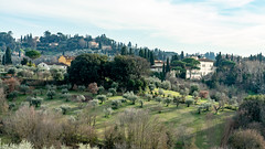 DSC00609 (photobillyli) Tags: イタリア italy 意大利 italia florence palazzopitti boboligardens giardinodiboboli 波波里花園 piazzalemichelangelo michelangelosquare 米開朗基羅廣場 pontevecchio oldbridge 老橋 palazzovecchio oldpalace cathedralsquare santamariadelfiorecathedral baptisteryofstjohn giottosbelltower fiesole 菲耶索萊 ローマ firenze 翡冷翠 佛羅倫斯 フィレンツェ サンタ・マリア・デル・フィオーレ大聖堂 ヴェッキオ橋 ボーボリ庭園 サンタ・クローチェ聖堂 世界遺産 church cathedral basilica landscape palace sony a7rii a7r2 sonyfe24105mmf4goss carlzeissbatis2818