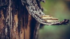Rings :) (MoZo Photography) Tags: smc takumar 50mm f18 sony a6000 wedding ring macro nature