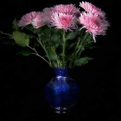 Chrysanthemums in Blue Vase (kinglear55) Tags: flower vase fujifilme500 adobe elements