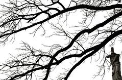"Cincinnati - Spring Grove Cemetery & Arboretum ""Crossing Over"" (David Paul Ohmer) Tags: cincinnati ohio spring grove cemetery arboretum jesus cross tree branches silhouette"