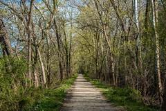 C&O Canal Tow Path on April 11, 2019 (Odonata457) Tags: towpath cocanalhistoricalpark pointofrocks frederickcounty maryland