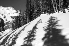 Sunshine Shadows 2 (5of7) Tags: banffnationalpark banff alberta canada ski shadow winter snow february 2019 blackandwhite trees mountain tree nature nopeople beautiful light shadows fabuloso scape friendlychallenges challengewinner fav 7fav